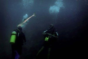 Upon arriving the sea bottom 30 meters below, a curious remora approaches, swimming silent circles around us.