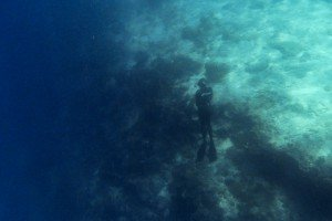 Free-Diving Pemba