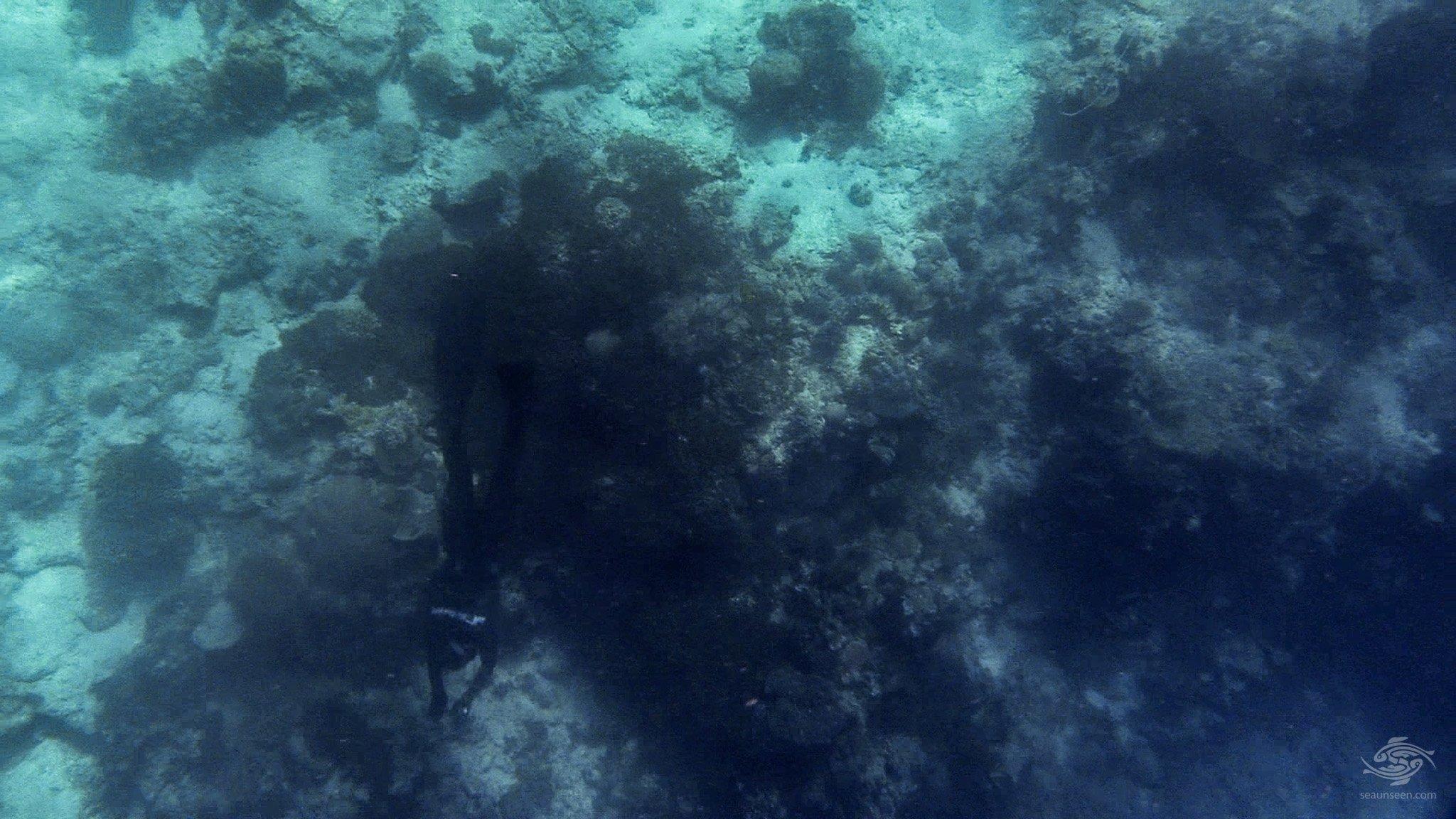 Free-Diving Pemba Island