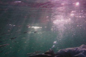 Free-Diver