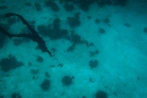 Tanzania Free-Diving