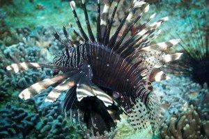 lionfish dar es salaam