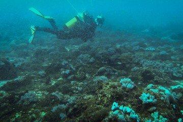scuba diving dar es salaam