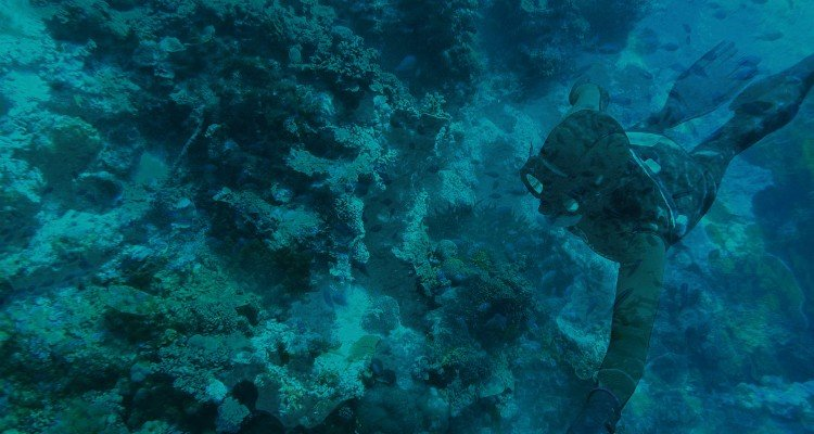 Freediving Pemba Island