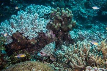 Jena Reef Mafia Island