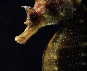 macro-underwater-photography-1