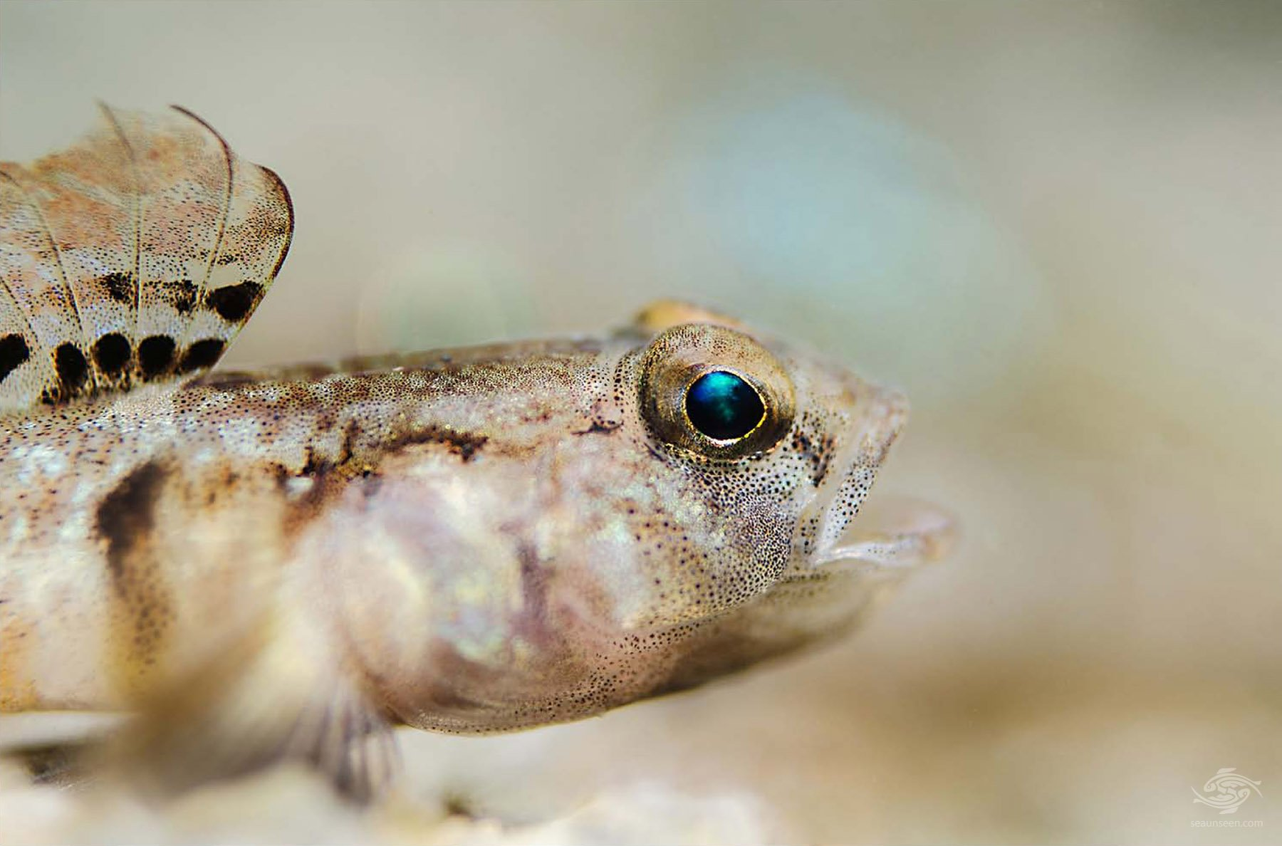 underwater macro photography