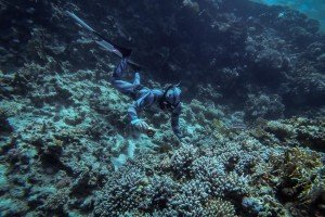 freediving sharm el sheikh