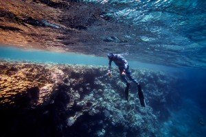 sharm freediving