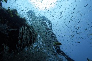 zanzibar freediving