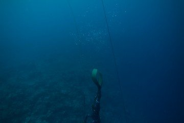 diving tanzania africa