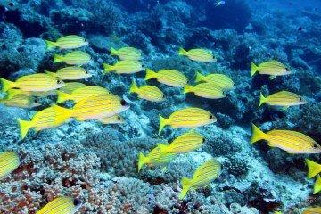 Mafia island scuba diving Tanzania Mikindini reef inner34