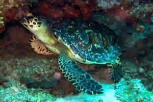 scuba Diving Dar es Salaam Tanzania Lauras Garden Octupus Reef21