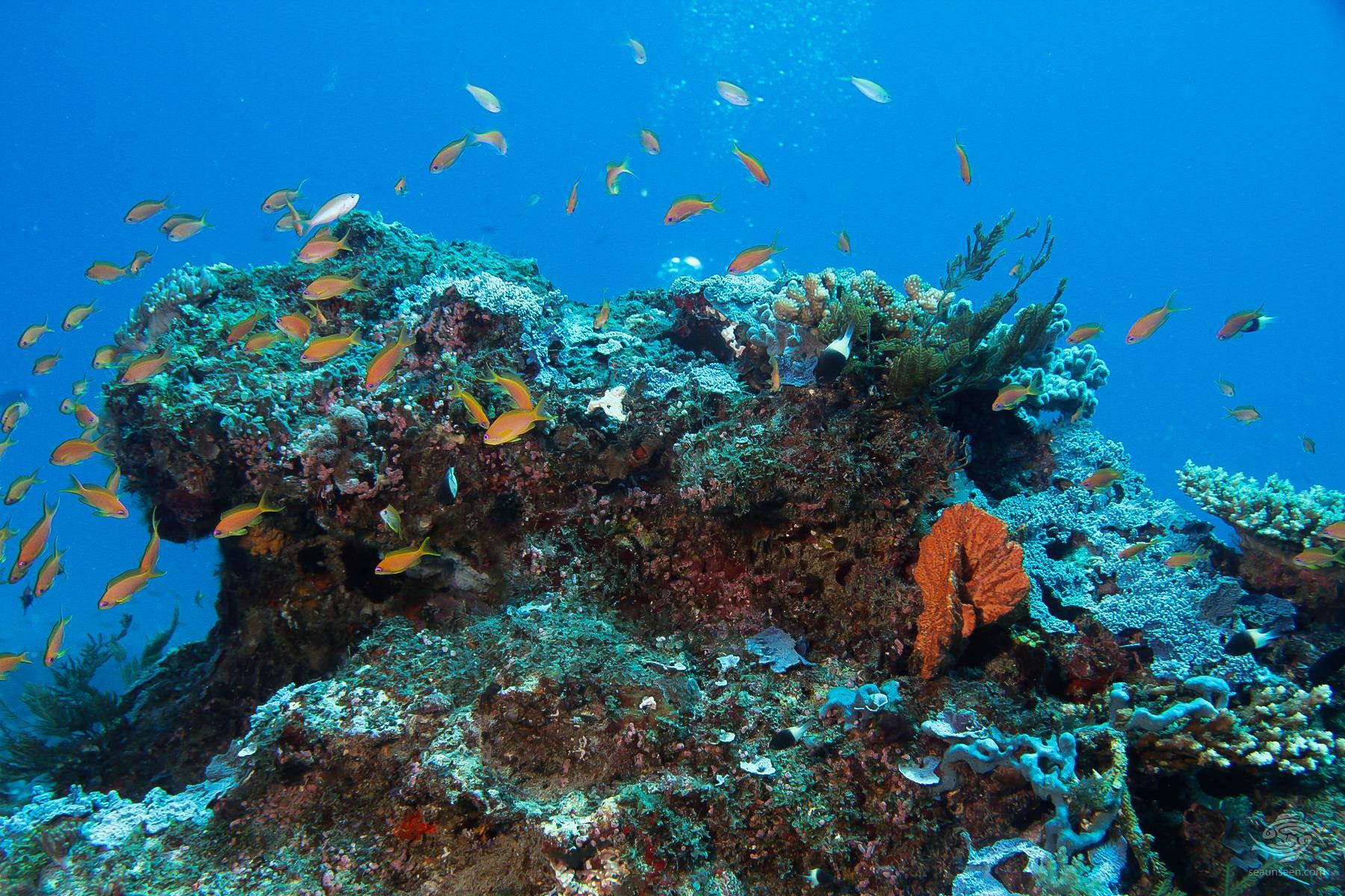 Coral bommie in the Mafia Island Marine Park diving Tanzania