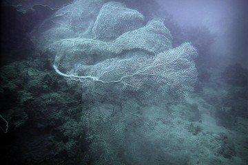 Sea Fan Dive