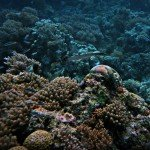 Coral Reefs 4