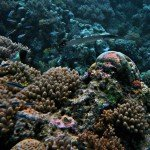 Coral Reefs 3