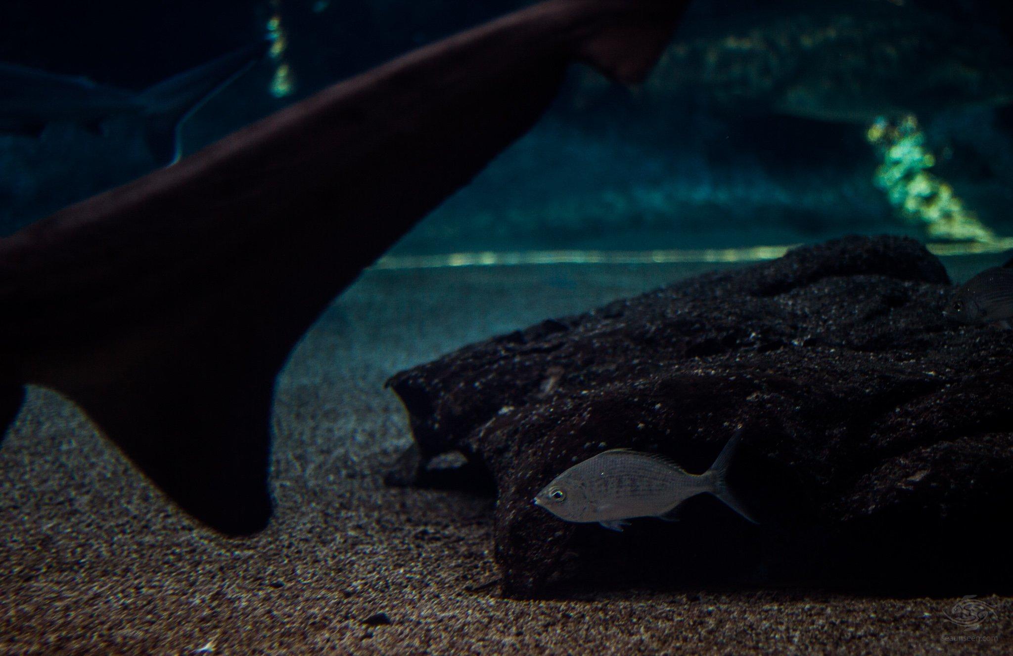 Shark Prey