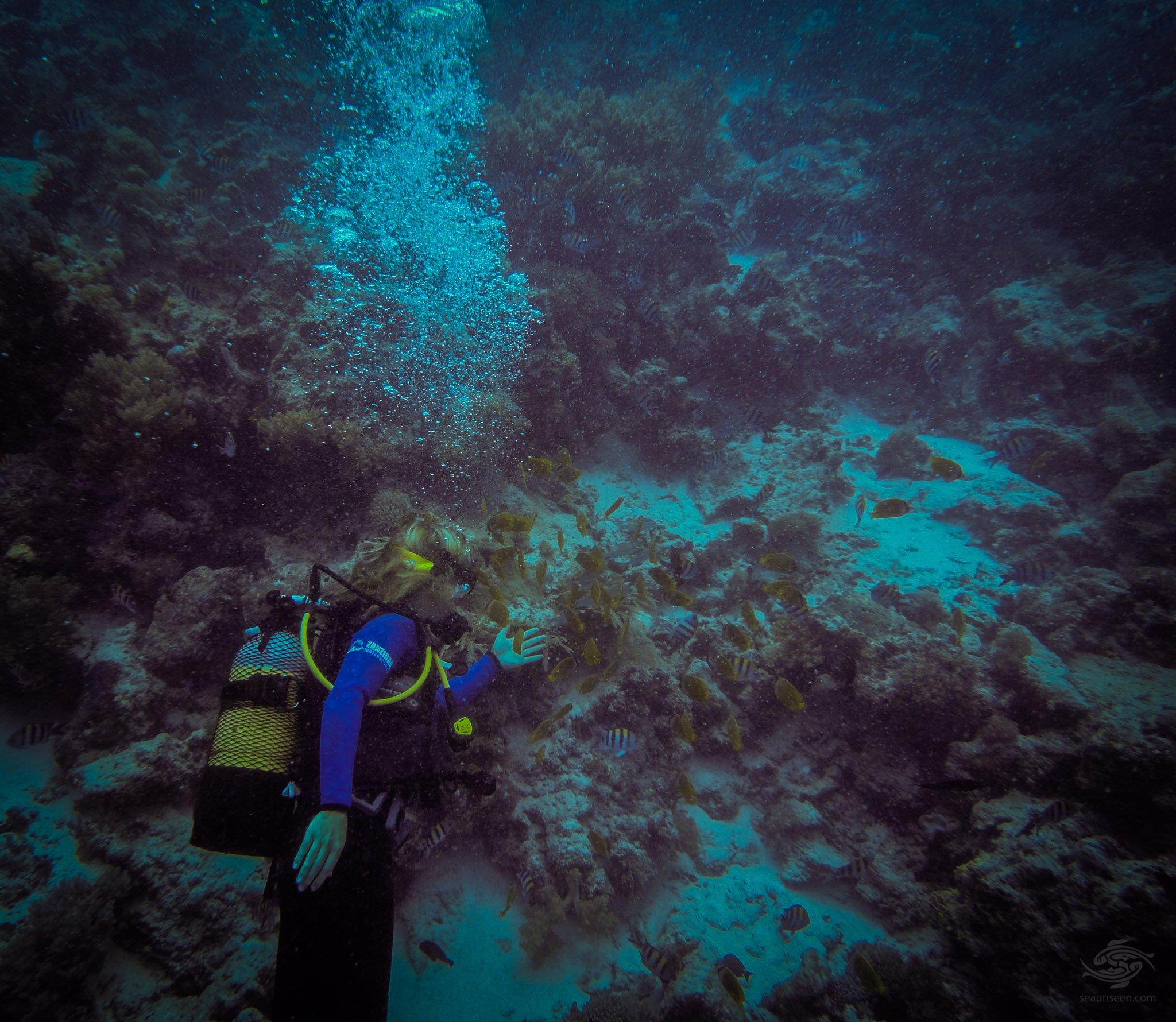 Scuba-Diving-swm