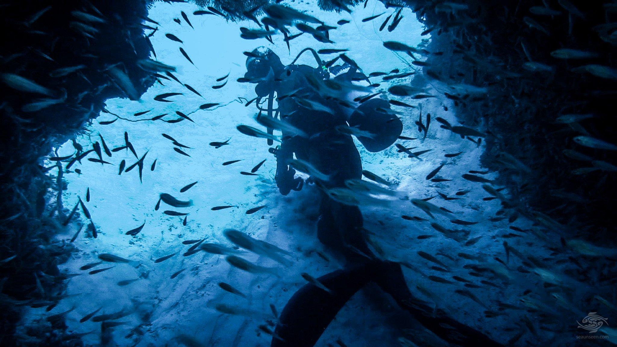 Scuba-Diving Pemba Island