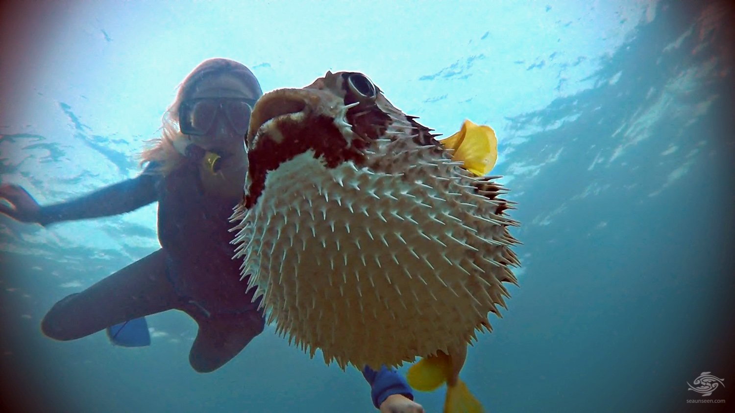 Pufferfish Seaunseen