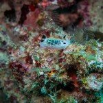 underwater photography tanzania