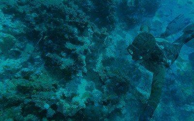 Freediving Pemba Island