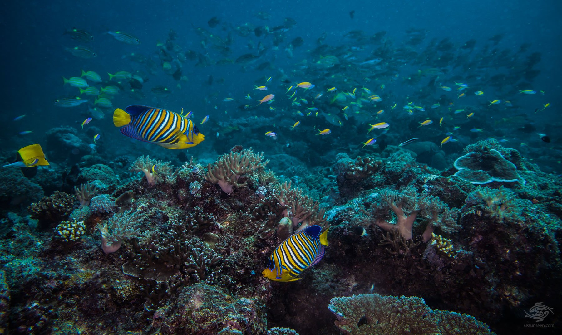 Scuba Diving Mafia Island