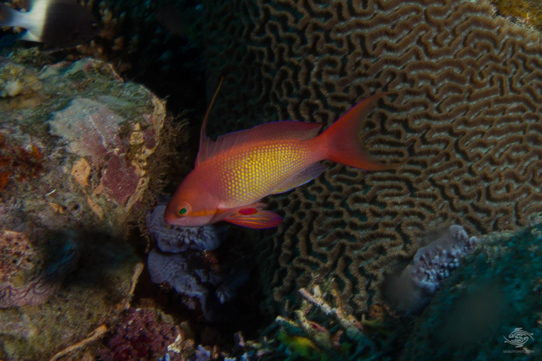 most beautiful fish