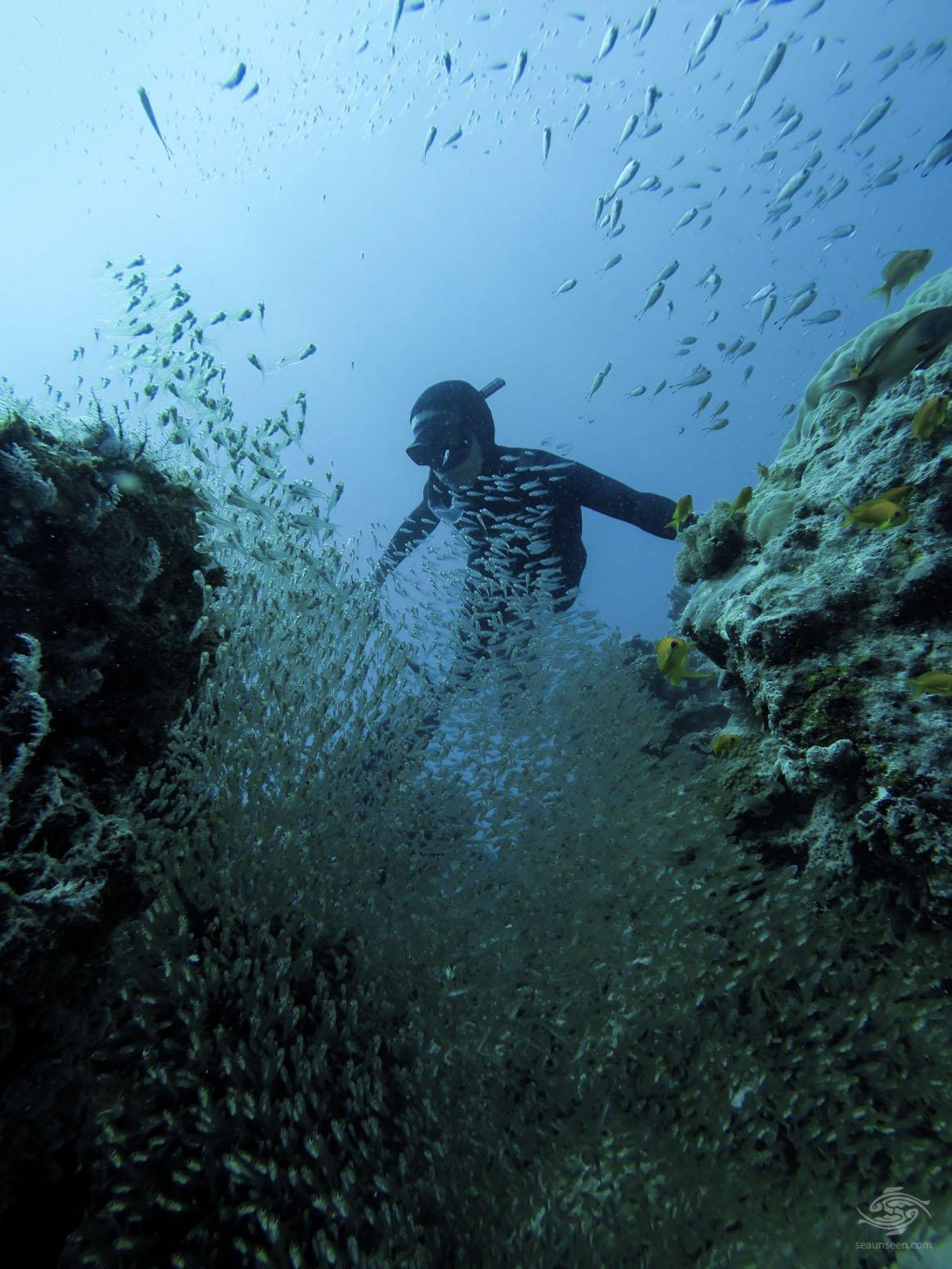 freediving tanzania Supreme Tranquility