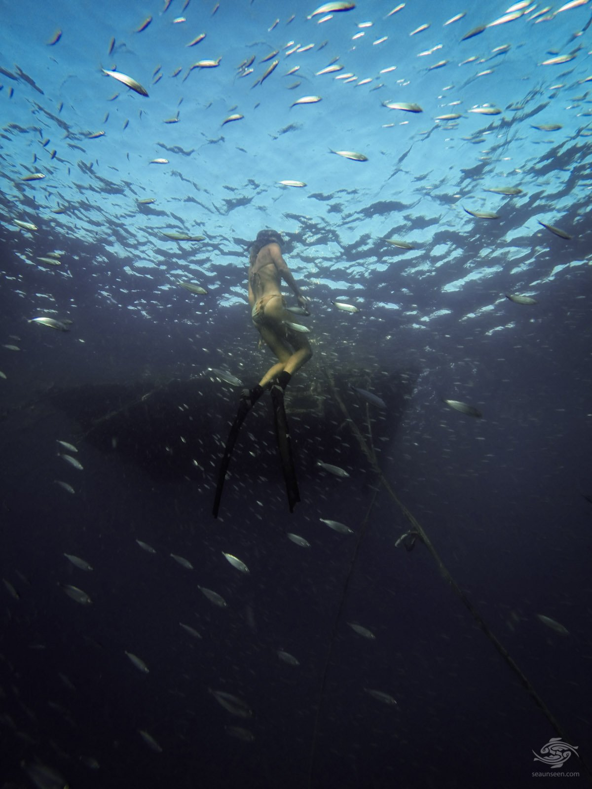 freediving tanzania Ascending Through Baitballs