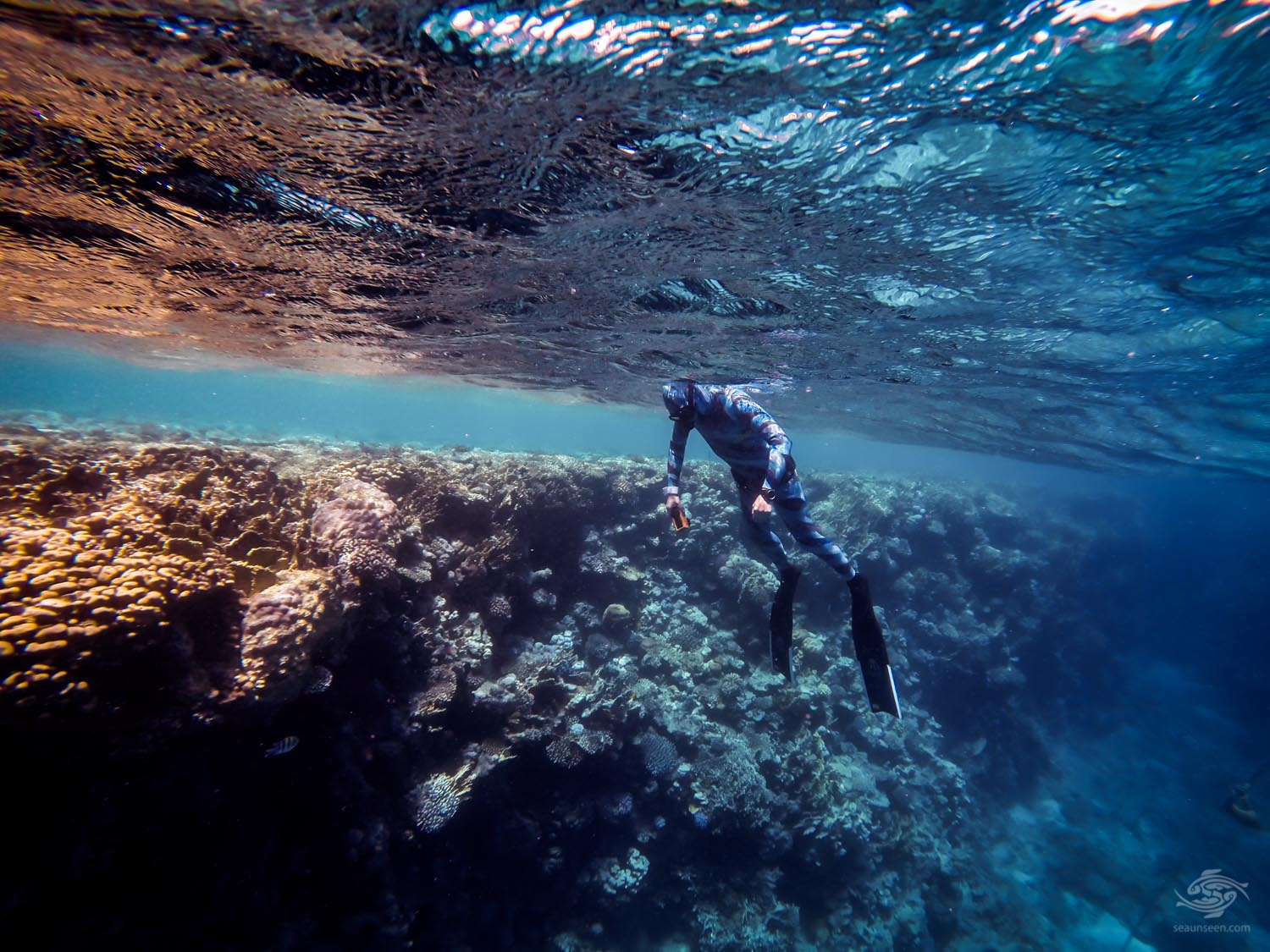 sharm freediving At the Drop off