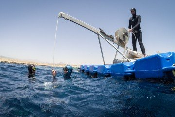 freediving no limits sharm el sheikh