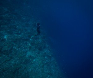 spearfishing freediving tanzania