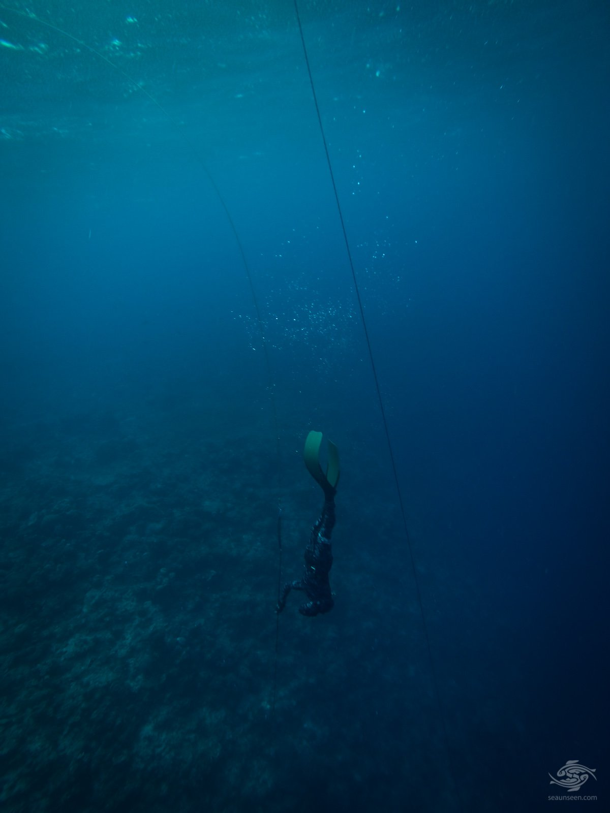 diving tanzania Pole Spear in Hand