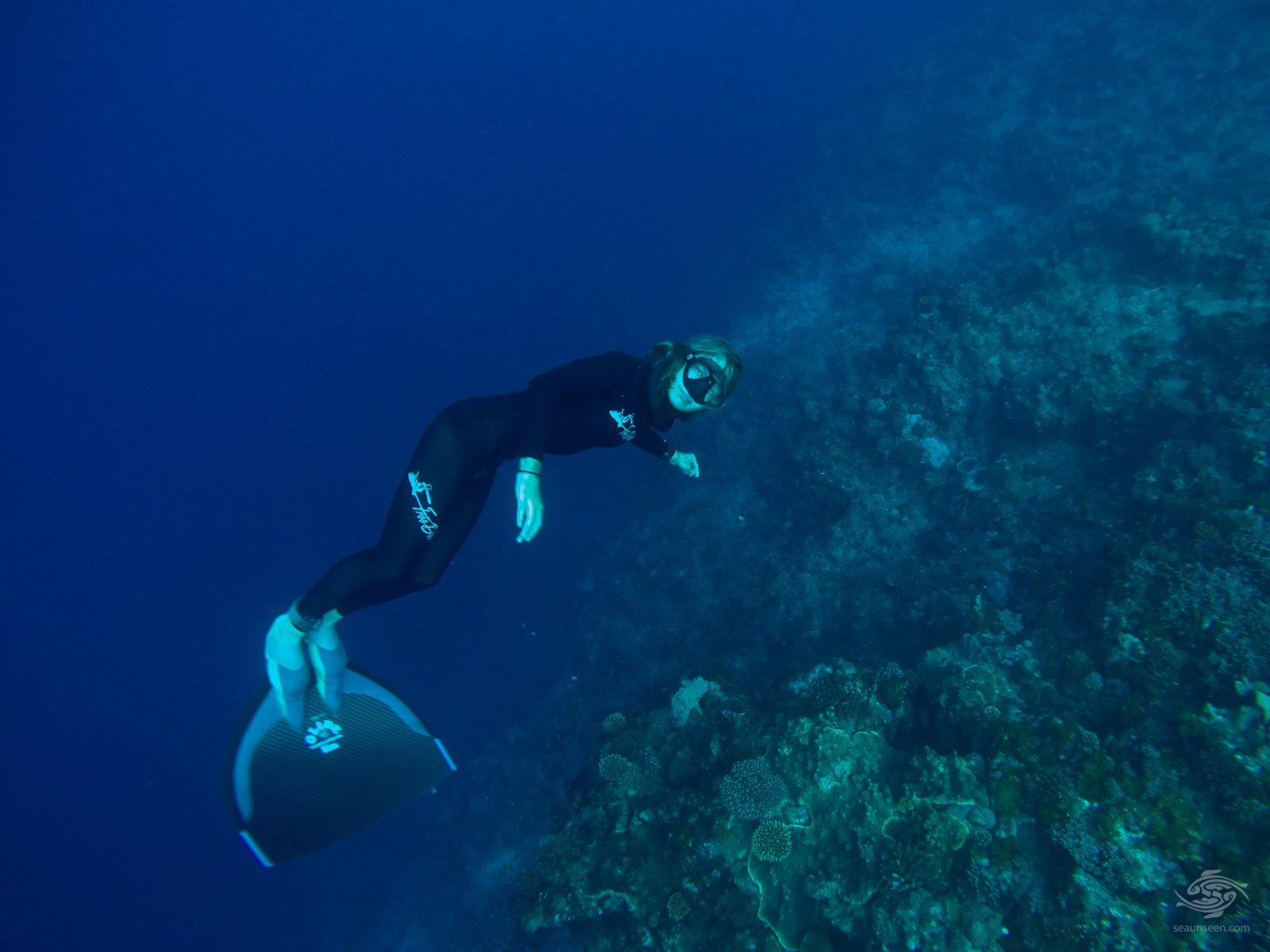 diving tanzania Freediving at Kilwa's Wall