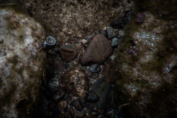 Feeding Snail