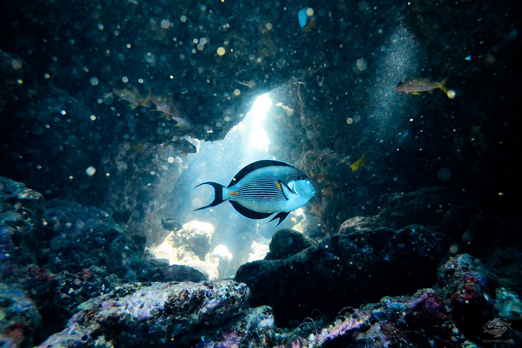 diving africa