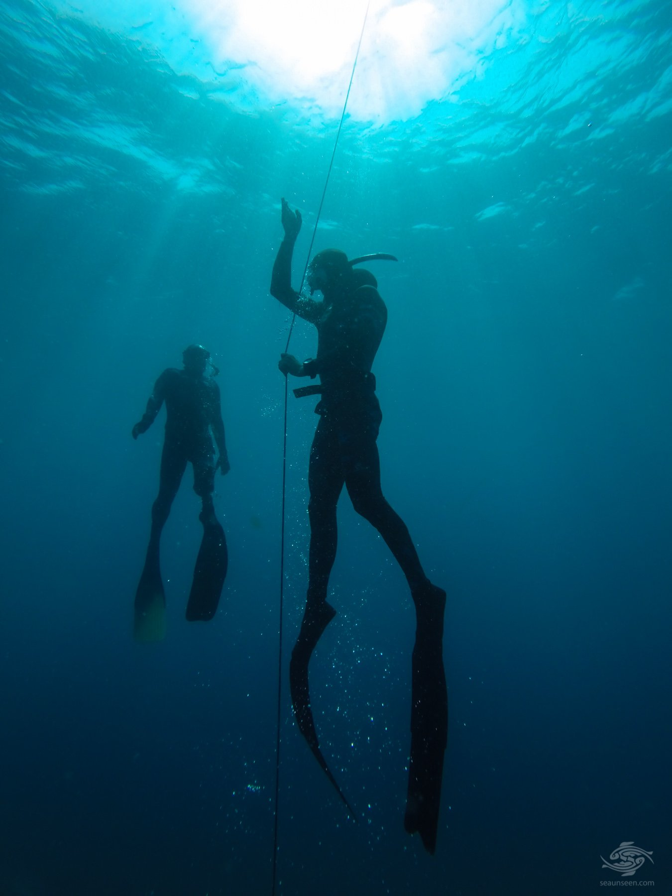 diving tanzania Free Immersion Line Diving