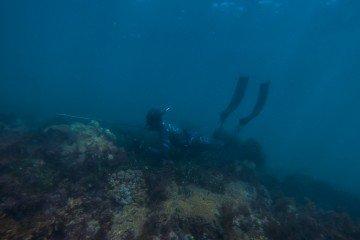 scuba diving spearfishing
