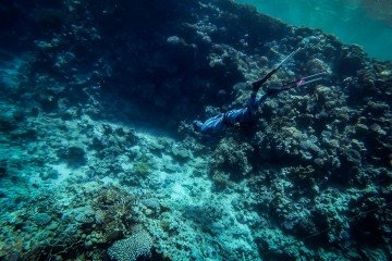 Reef Diving in Sharm