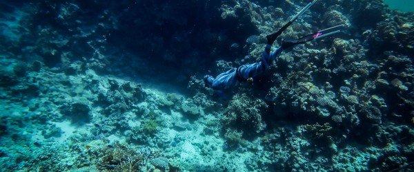 Reef Diving in Sharm
