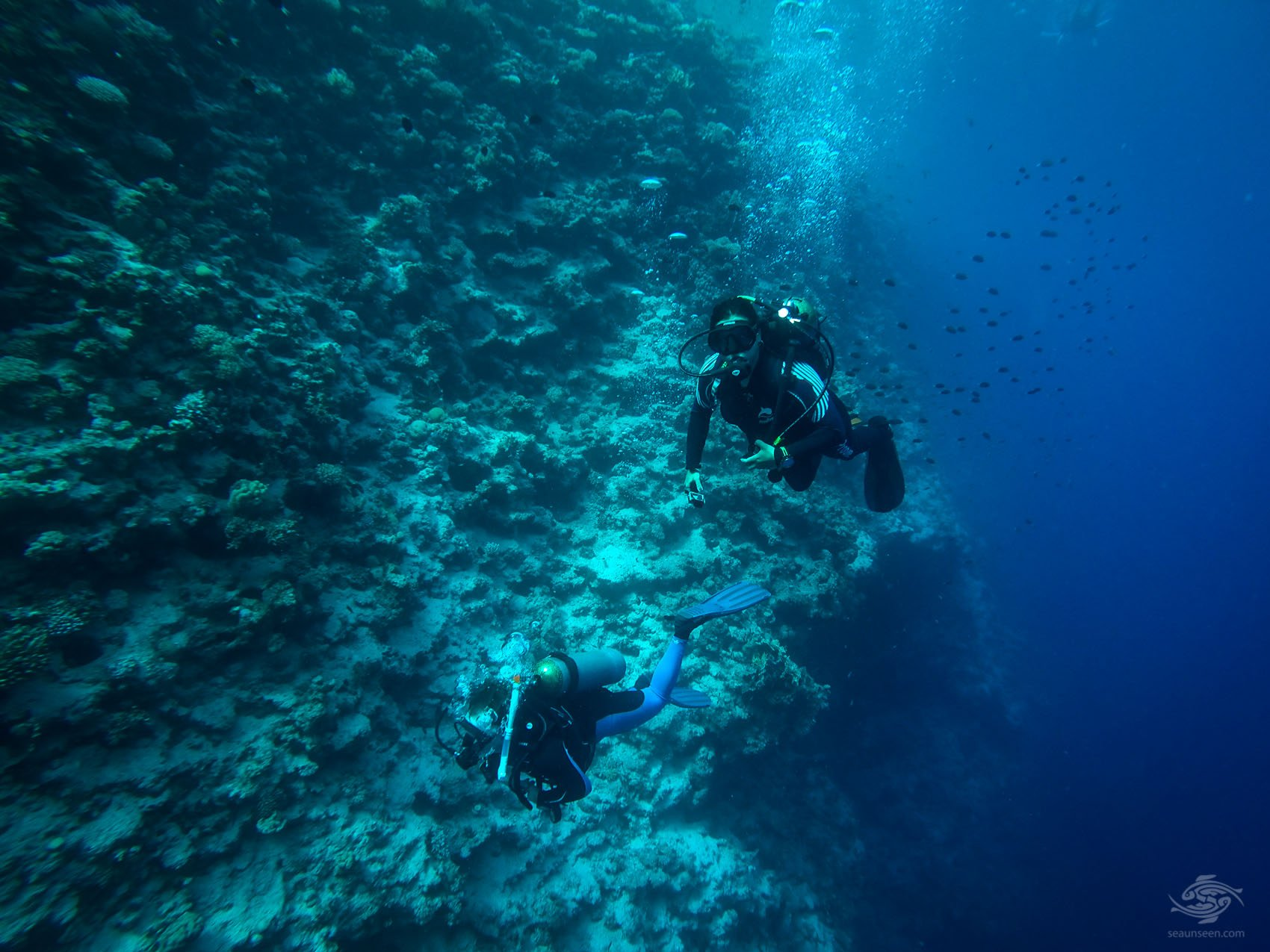 freediving egypt dahab