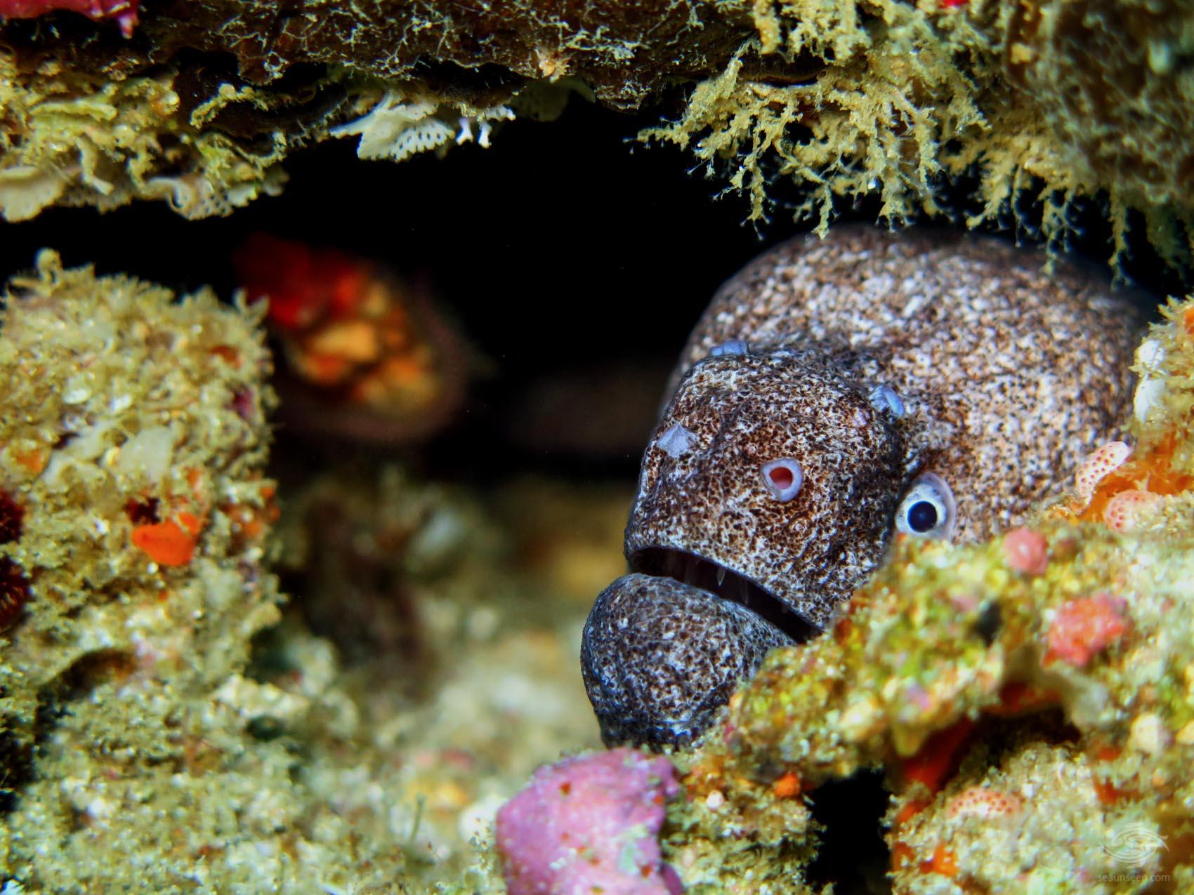 Scuba Diving Tanzania