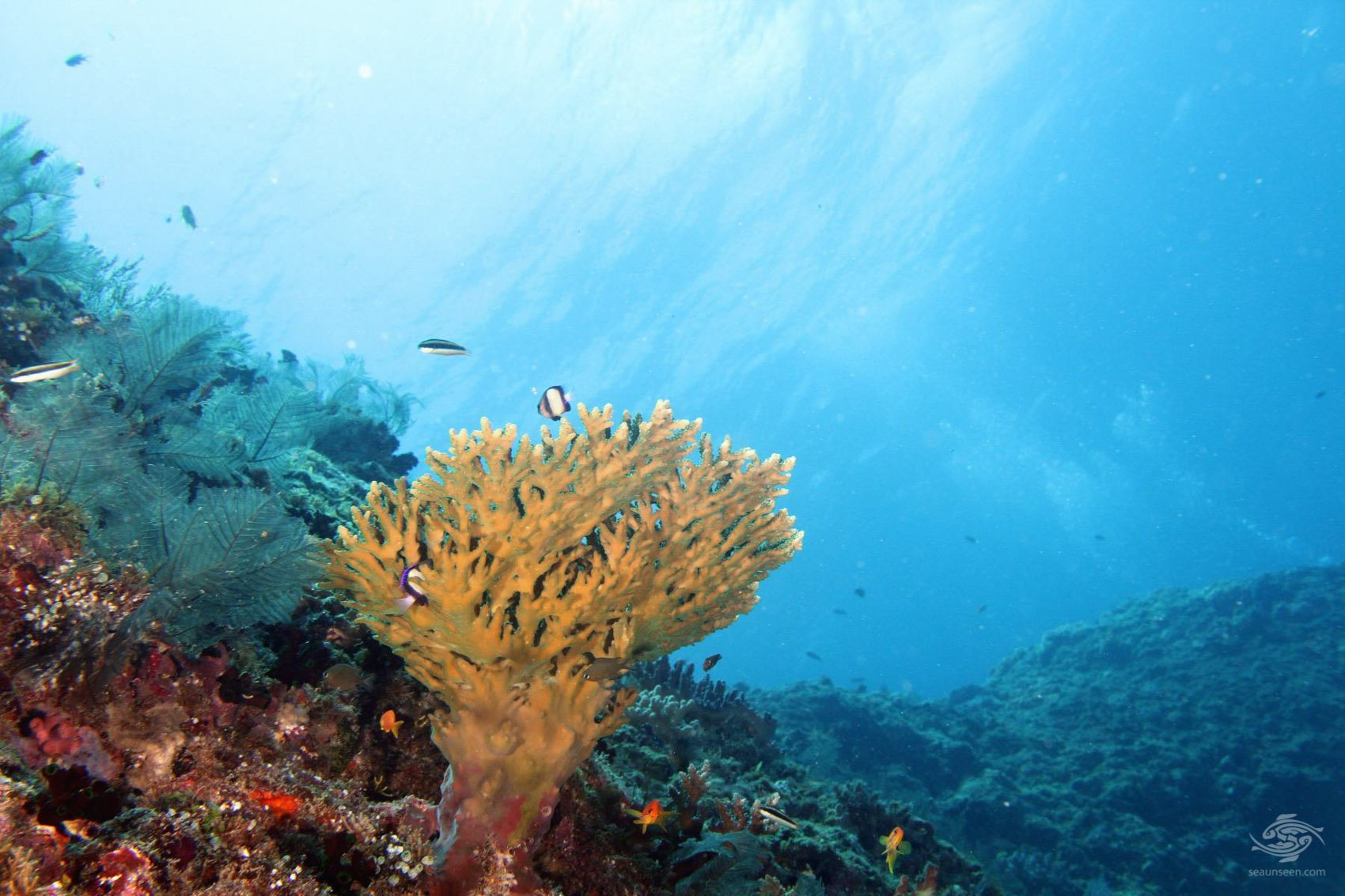 Dindini wall-Mafia Island dive sites