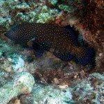Mafia island Mikindini Reef scuba diving Tanzania