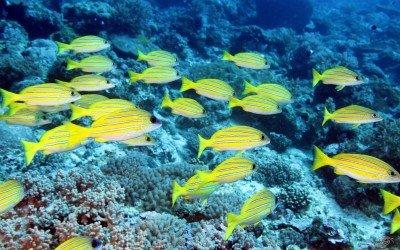 Mikadini Reef Inner