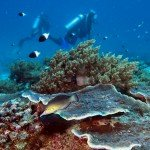 Middle Scuba Diving Tanzania East Africa Mafia Island