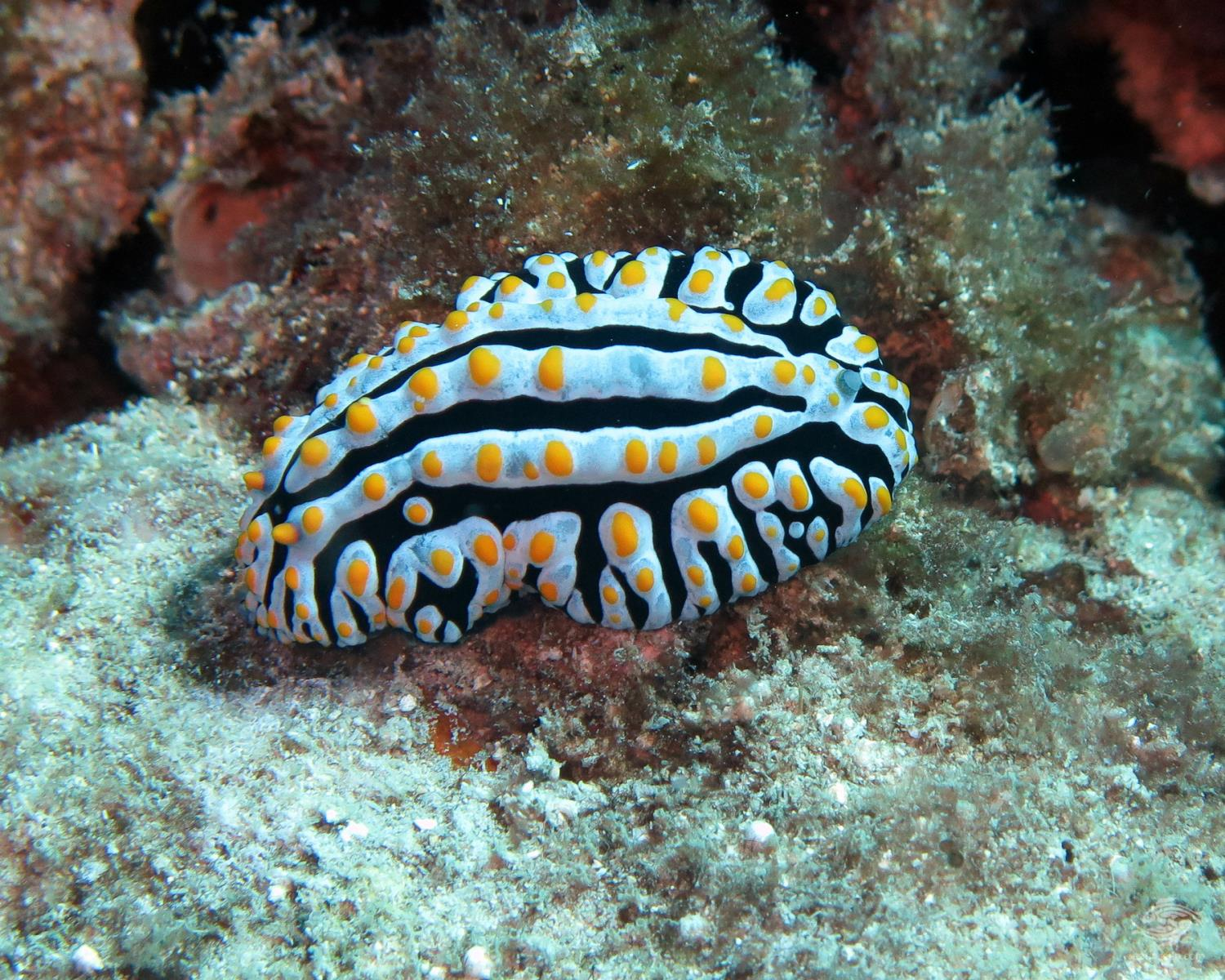 Nudibranch Dar es Salaam Tanzania Dive sites