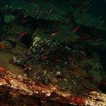 Bongoyo Shipwreck Diving-Dar es Salaam Tanzania